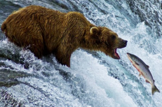 Mastering The Salmon Dance: Why High Quality Content Isn't Enough To Get Noticed Online